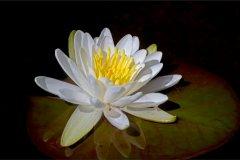 ann_hilborn-aquatic_beauty-128