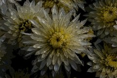 ann_hilborn-crystalline_delight-128