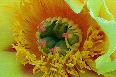 ann_hilborn-luscious_in_yellow-128