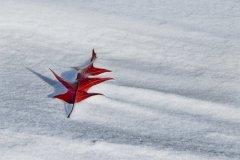 P2-Winter-Leaf-EG
