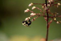 cheryl_goff-bee-263
