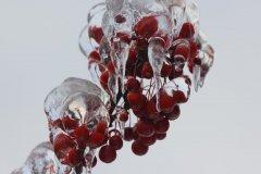 cheryl_goff-frozen_berries-263
