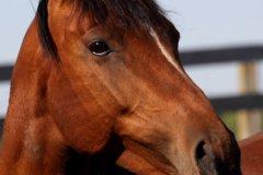 cheryl_goff-horse-263
