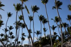cheryl_goff-trees-263