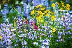 Jeff_Gardner-Alpine_Flowers