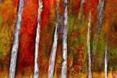 Jeff_Gardner-Fire_Birches_