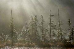 Jeff_Gardner-Webs_in_the_Mist