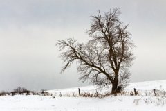 peter_clute-snowy_fenceline-113