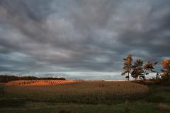 22LS1-Autumn-Sunset-FS-M