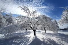 22P1-Winter-Magic-FS-M
